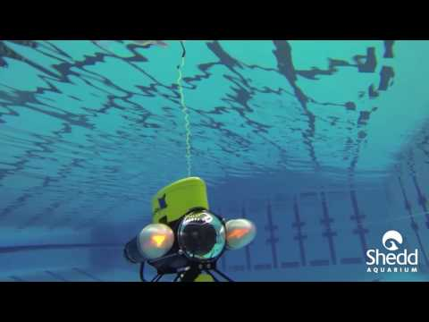 Science Pub: Sadie Norwick on Shedd's Underwater Robotics Club
