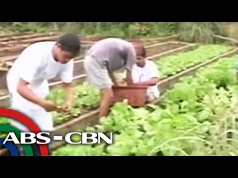 TV Patrol Eastern Visayas: Farm tourism ha sinirangan bisayas, mas papakusgon pa han DOT