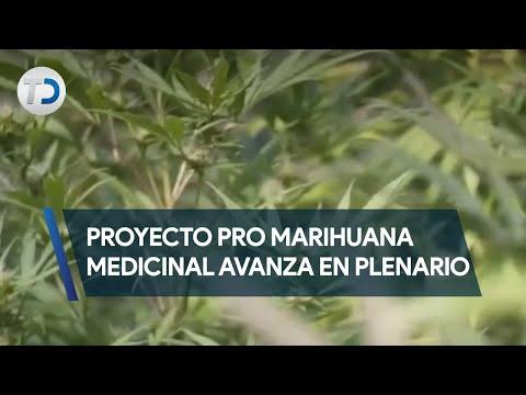 Proyecto pro marihuana medicinal avanza en plenario