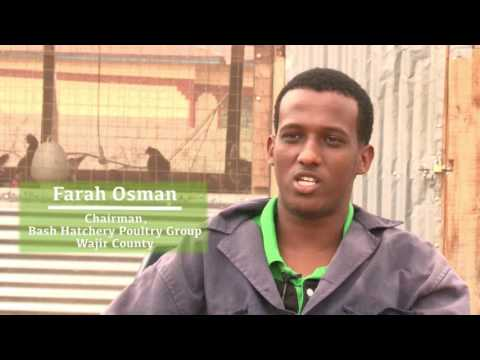 First Time Chicken Farmers in Wajir County Reaping Big Rewards