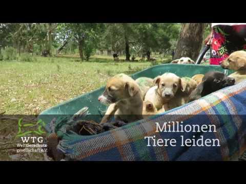 Millionen Tiere leiden. Doch die Welttierschutzgesellschaft hilft!