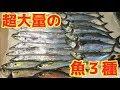 大量に釣れた魚を広いキッチンで3人同時に捌く!!