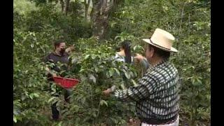 Oficios Chapines: Cosecha y corte de café