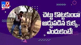 Viral Video : చెట్టు కొట్టకుండా అడ్డుపడిన కుక్క..ఎందుకంటే! - TV9 - TV9
