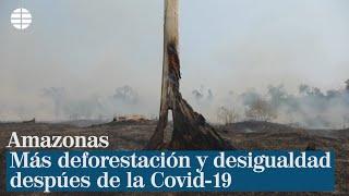 Amazonas: más deforestación y desigualdad después de la Covid-19