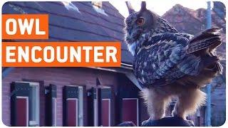 Crazy Owl Encounter | Hedwig Returns