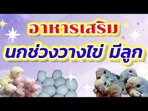 #อาหารเสริมช่วงนกวางไข่มีลูก-#