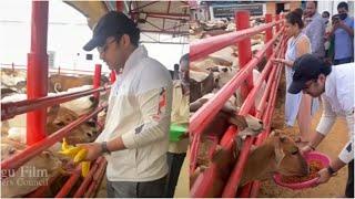 Hero Vishwaksen Feeding Cow's in Goshala   #vishwaksen  TFPC - TFPC
