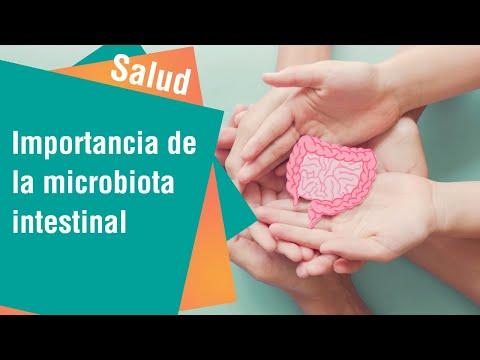 La importancia de la microbiota intestinal en la prevención de enfermedades | Salud