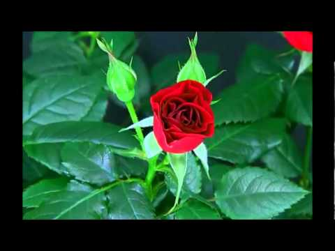 bloomingrose divorced singles personals Start meeting singles in dunbar today with our free online personals and free ads of available west virginia singles singles | dunbar divorced.
