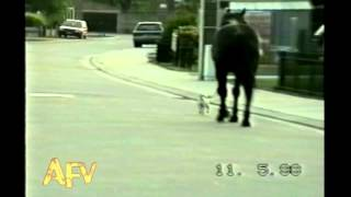 Small Dog Walks Big Dog - AFV