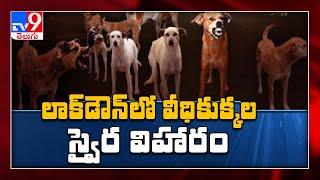 లాక్ డౌన్ లో తీవ్ర సమస్యగా మారిన కుక్కల బెడద, ఆకలితో జనం పై దాడి    Hyderabad - TV9 - TV9