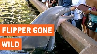 Dolphin Pulls iPad Into Water | Flipper Gone Wild