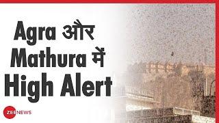 टिड्डी दलों के हमले को लेकर Agra और Mathura में High Alert - ZEENEWS