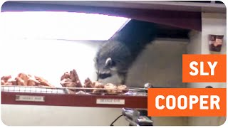 Sneaky Raccoon Steals Donut | Cheat Day