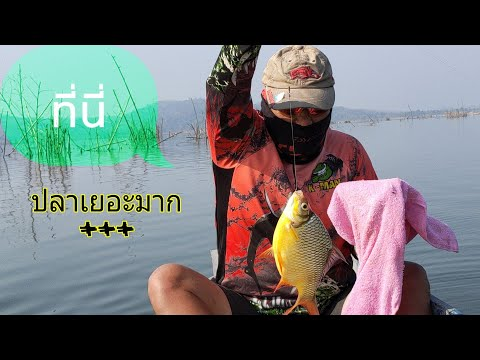 ตกปลาห้วยโสมง-#พักผ่อนนอนเกาะ#
