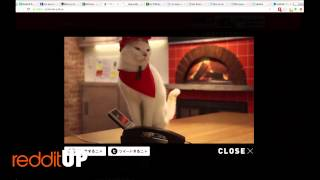 Pizza Cats: redditUP 5