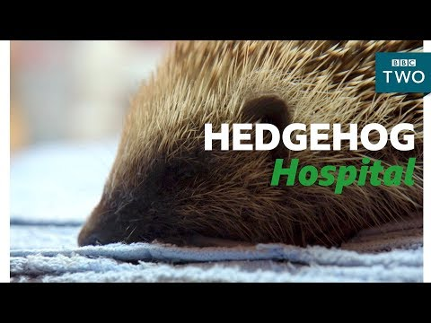 connectYoutube - Looking after a Hedgehog - Hugh's Wild West - BBC Two