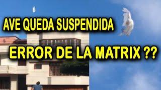 ¨EL MILAGRO DE LA GARZA¨ EN TULUÁ,COLOMBIA | POLICÍAS Y BOMBEROS ACUDEN