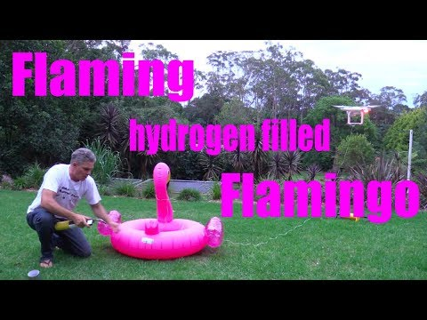 Flaming Pink Flamingo Filled with HYDROGEN GAS ignites