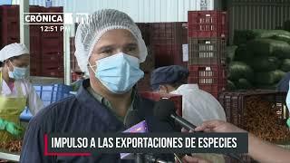Doselva: la empresa en Nicaragua que exporta cúrcuma, jengibre y vainilla