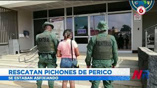 Policía rescata pichones de perico que mujer llevaba en bolsas plásticas
