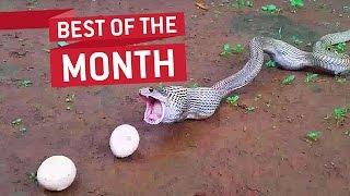 Best Videos Compilation September 2016 || JukinVideo