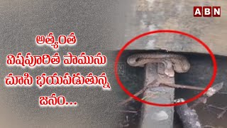 Most Poisonous Snake Cobra Found in Kelwa Biogas Plant | Snake Catching Videos | ABN News - ABNTELUGUTV