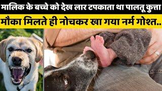 मालिक के बच्चे को देख लार टपकाता था पालतू कुत्ता, मौका मिलते ही नोचकर खा गया नर्म गोश्त - AAJKIKHABAR1
