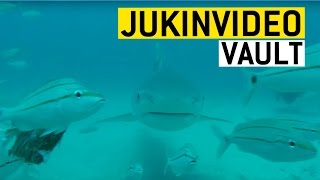 Shark Encounters from the JukinVideo Vault