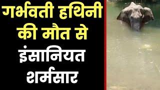 Another Elephant Death Caused By Crackers, केरल में विस्फोटक से एक और हाथी को मारा, इंसानियत शर्मसार - ITVNEWSINDIA