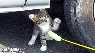 子猫 遊ぶ『子猫!発見!猫じゃらし初体験に興味津々で遊ぶ野良猫子ネコ』などなど
