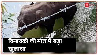 Zee News In Palakkad: तस्करी की वजह से मारे जाते है बड़ी संख्या में हाथी | Kerala Elephant Death - ZEENEWS