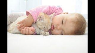 子猫 赤ちゃん『【ニヤニヤ注意】超癒される!猫と赤ちゃんの可愛い仲良し動画#1』などなど