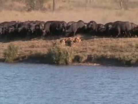 """Video: Ir gyvūnai žino, - kad su """"chebra"""" drąsiau"""