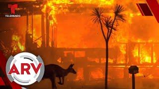 EE. UU. envía más bomberos a Australia para controlar los incendios   Al Rojo Vivo   Telemundo