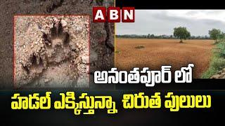 అనంతపూర్ లో హడల్ ఎక్కిస్తున్నా  చిరుత పులులు | Leopard tigers Fears In Anantapur Dist | ABN Telugu - ABNTELUGUTV