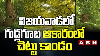 విజయవాడలో గుడ్లగూబ ఆకారంలో చెట్టు కాండం || Vijayawada Latest News Today || ABN Telugu - ABNTELUGUTV