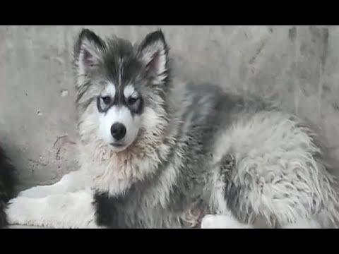 Buscan por más de cuatro meses a su cachorro robado