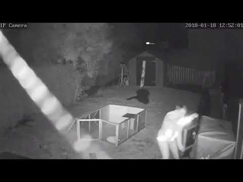 connectYoutube - Rabbit Rescue as Storm David Rips Through the Covers of Its Shelter