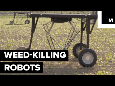 These Weed-killing Robots Could Give Big Agrochemical Companies A Run For Their Money
