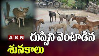 దుప్పిని వెంటాడిన శునకాలు    Deer Vs Street Dogs    NagarKurnool Dist    ABN Telugu - ABNTELUGUTV
