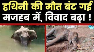 Kerala Elephant Death Dispute District: मल्लपुरम में नहीं पल्लकड में हुई हथिनी की हत्या विवाद गहराया - ITVNEWSINDIA
