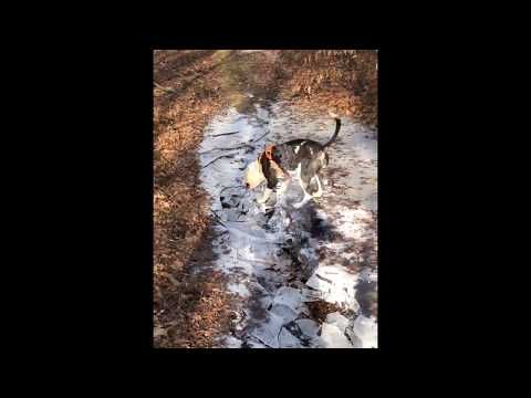 connectYoutube - Dog Can't Contain His Excitement When Breaking Ice