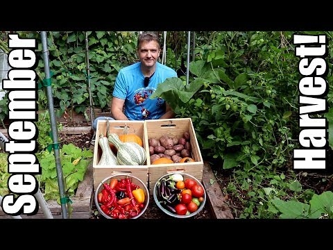 September Vegetable Garden Harvest (2018): Local Food At Its Best!