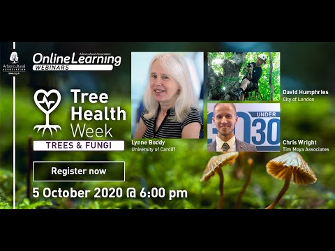 Tree Health Week: Trees & Fungi with Lynne Boddy, David Humphries and Christopher Wright