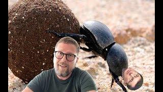 Грозный-грозный жук Юра