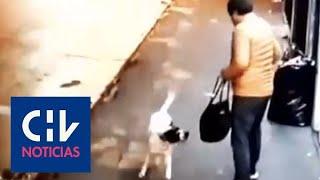 Le ladró, lo mordió y acorraló: Un perro colaboró en el robo de una camioneta