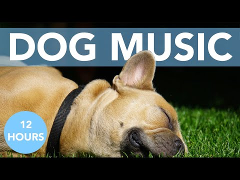 DOG MUSIC: 12 Hours of Relaxing Music for Anxious Dogs!