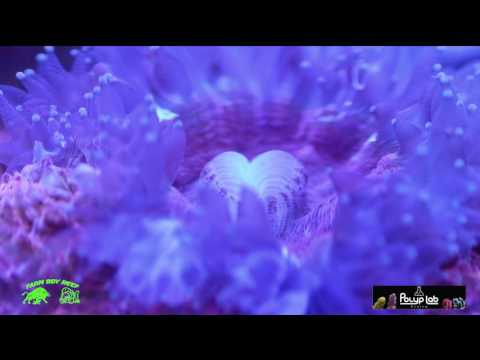The ultimate  coral food reef roids by polyplab  !